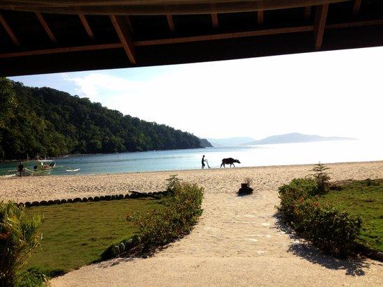 Secret Paradise Resort & Turtle Sanctuary : vue depuis le restaurant