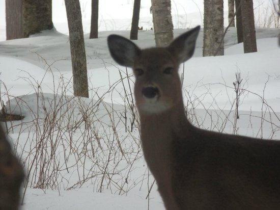 Hotel-Motel Le Boise Du Lac: les animaux de la forêt