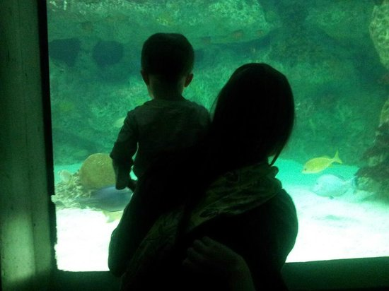 National Aquarium, Baltimore: Every member of the family enjoys this place!