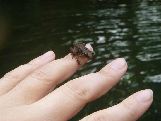 White River: He hopped on my tube for a ride.