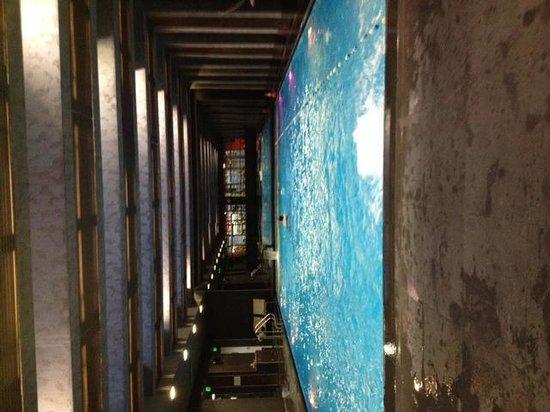 City Gardens: piscine
