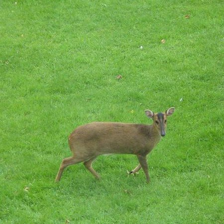 The Old Rectory B&B: Wildlife