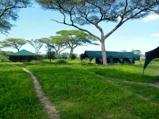 Kirurumu Serengeti Camp: The compound