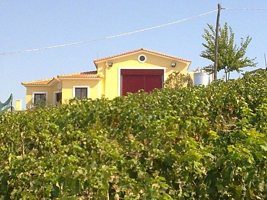 Vriniotis Winery: our winery