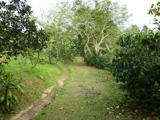 Hacienda Pomarrosa: Lovely grounds