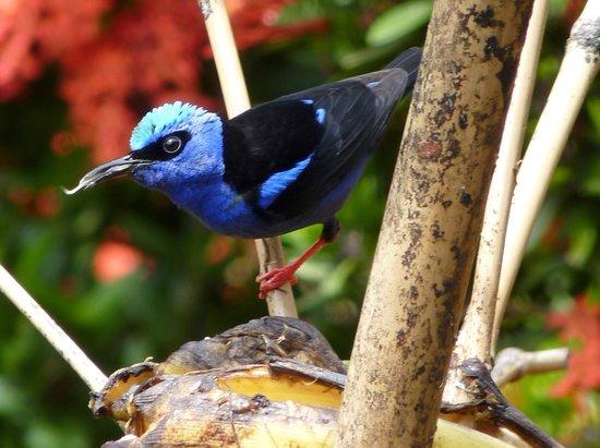 Tilajari Hotel Resort: Breakfast visitor