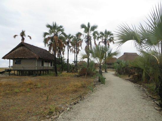 Maramboi Tented Camp: path to lodge