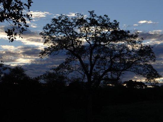 Elephant Plains Game Lodge: sunset