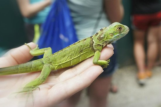 San Ignacio Resort Hotel: Check out the hotels Green Iguana Project! Great for big kids, like me, too!