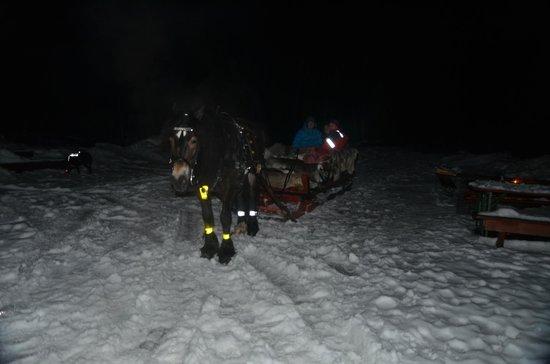 Oslomarka: Sleigh Ride