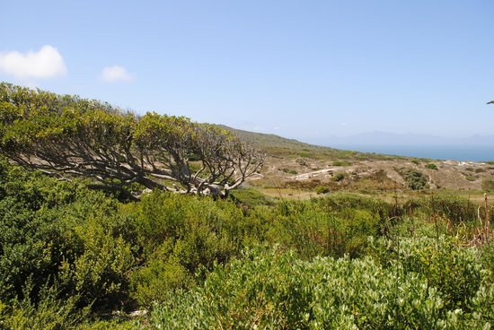Baz Bus - Day Tours: Beautiful vista of Cape of Good Hope