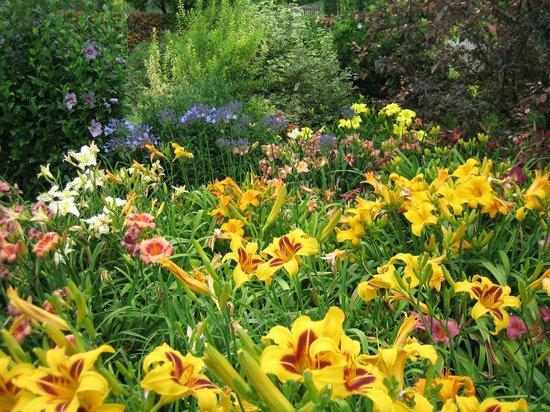 Il Giardino di Casa Biasi: In piena fioritura
