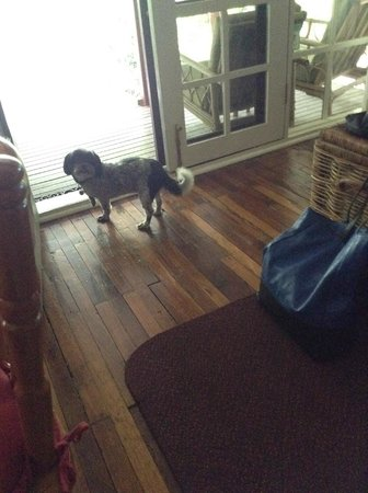 Stone's Throw Cottage B&B: Molly the smiley dog