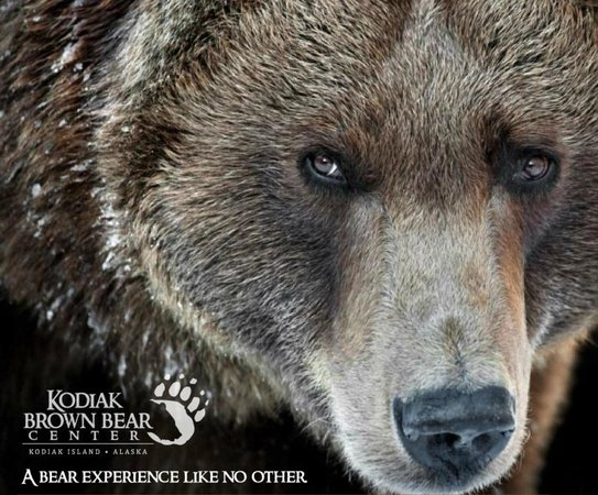 Kodiak Brown Bear Center : Logo