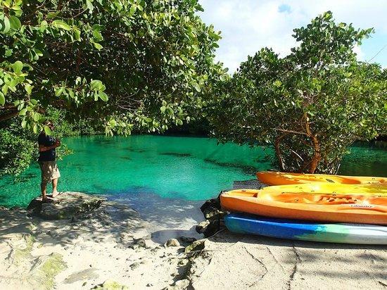 Divers UnderGround: Manatee Cenote