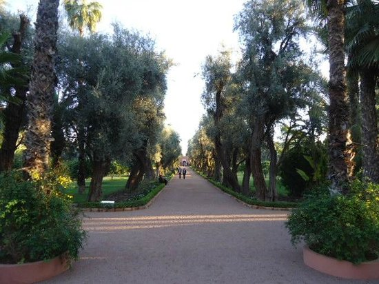 La Mamounia : 20 acre of fruit trees and 100 year old olive trees....