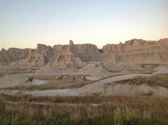 Badlands Inn: There is plenty of wildlife to see throughout Badlands National Park, SD.
