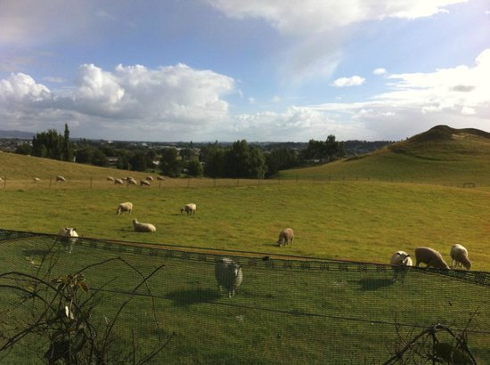 Wentworth Heights Bed and Breakfast : View of sheep pasture