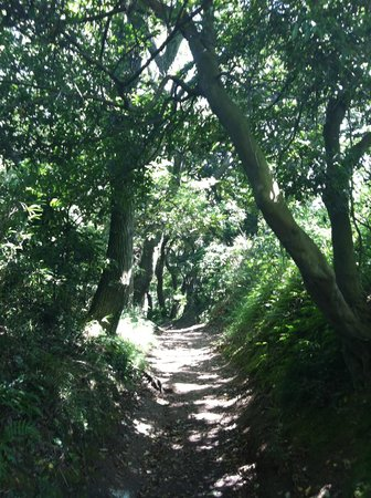 Kamakura Hiking Trails: The pathway