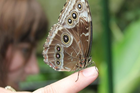 Parque Nacional Braulio Carrillo: The wonder of a butterfly on your finger!