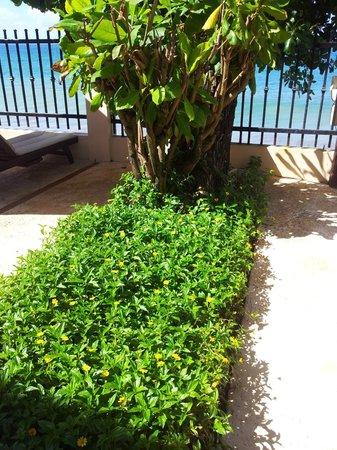 Tres Sirenas Beach Inn: So Green & Beautiful