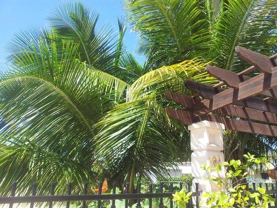 Tres Sirenas Beach Inn: Palm Trees