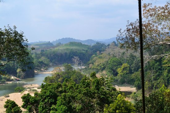 Taman Negara National Park: View from the canopy