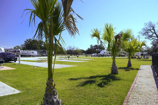Victoria / Coleto Creek Lake KOA: Palm Trees at our campground