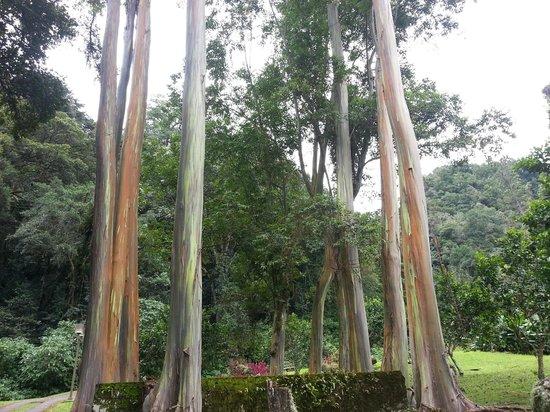 Hotel Bambito Resort : Nature
