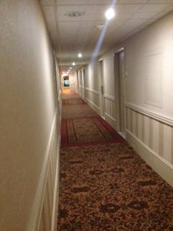 Holiday Inn Kitchener: corridor