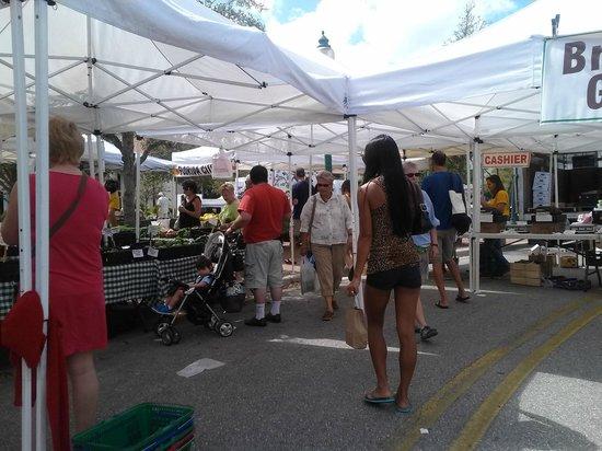 Sarasota Farmers Market: Nice Day!