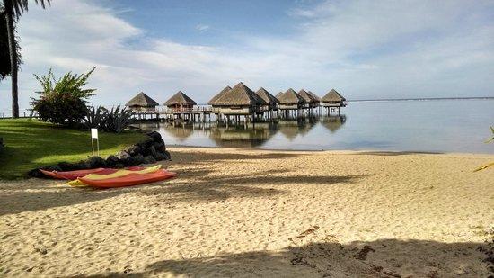 Le Meridien Tahiti: Snorkeling is very good here.
