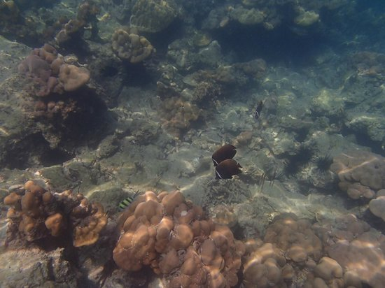 CoCo Cottage Koh Ngai : Snorkeling