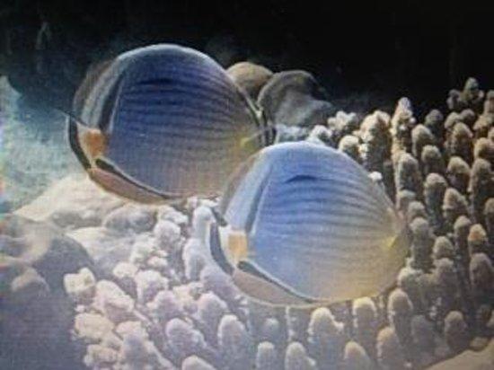 Thulhagiri Island Resort: Unterwasser...