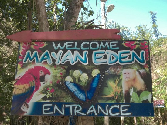 Butterfly Gardens : welcome!