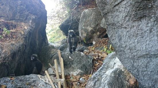 Grand Sea Discovery - Day Tours: Spider Monkeys