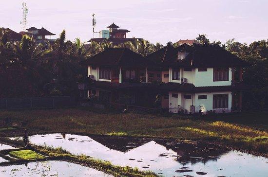 Puji Bungalow: rice paddies
