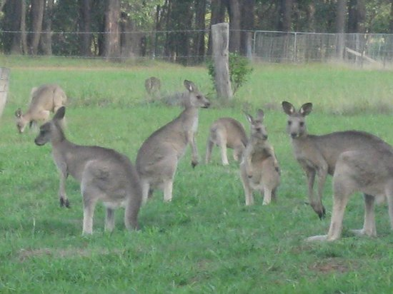 The Longhouse: Family of kangaroos