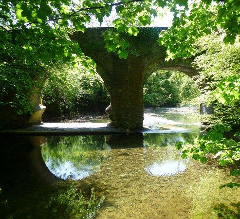 Plym Bridge Woods: Plym Bridge