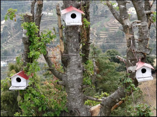 Red Roof Mukteshwar: Bird House 2