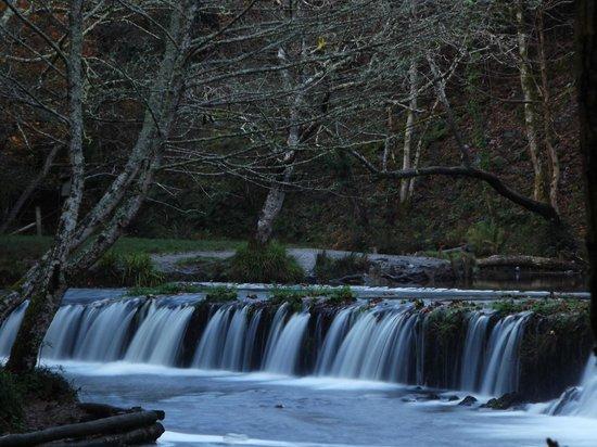 Plym Bridge Woods: Plym Wier