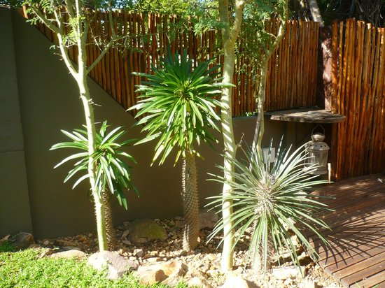 al Marrakesh Guest House: Aloe Garden