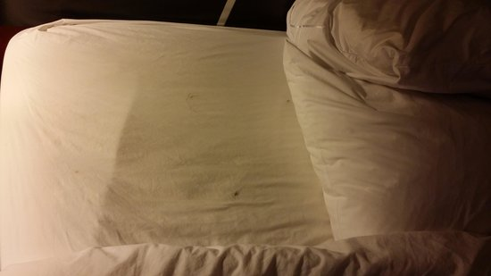 Hampton Inn Denver West / Golden : more hair under sheets and some in the other bed