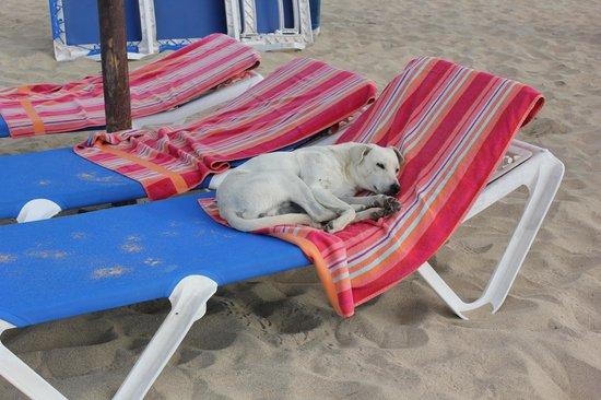 Hotel Oasis Belorizonte: à la plage les chiens s'impose!!!
