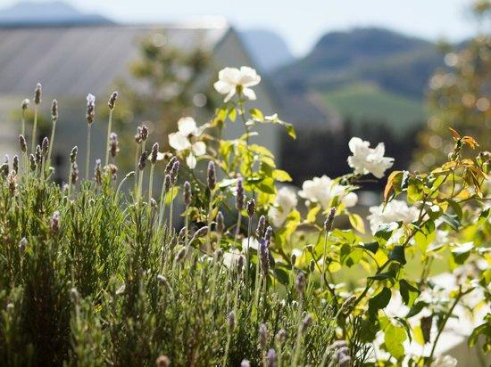 Lavender Farm Guest House Franschhoek: Garden