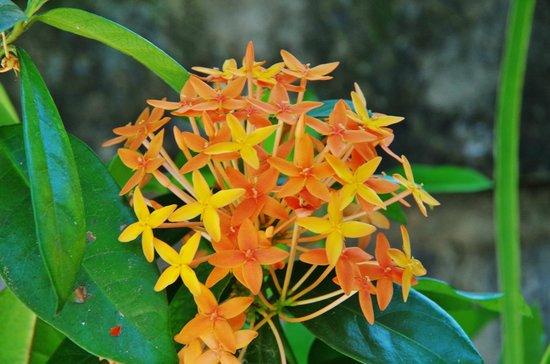 Putri Homestay : Viel Blumen im Garten