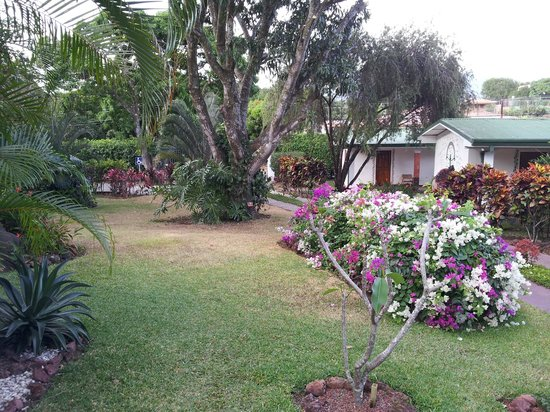 Hotel La Rosa de America: Really lovely gardens at front of hotel