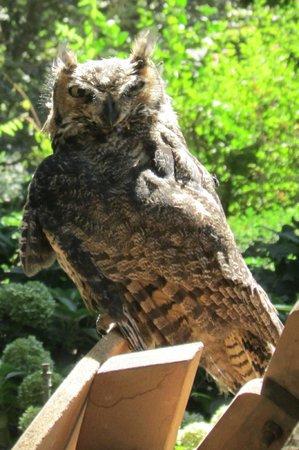 Hacienda Los Lingues: Que linda coruja me visitou durante o dia!
