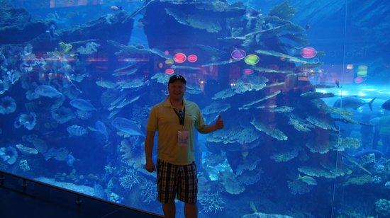 Dubai Aquarium & Underwater Zoo: Autor na tle akwarium