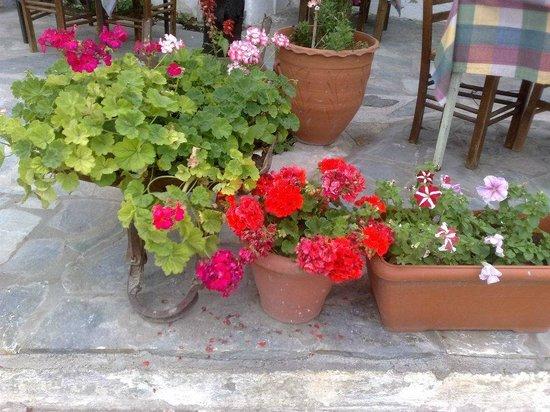 En Hatipi : Garden